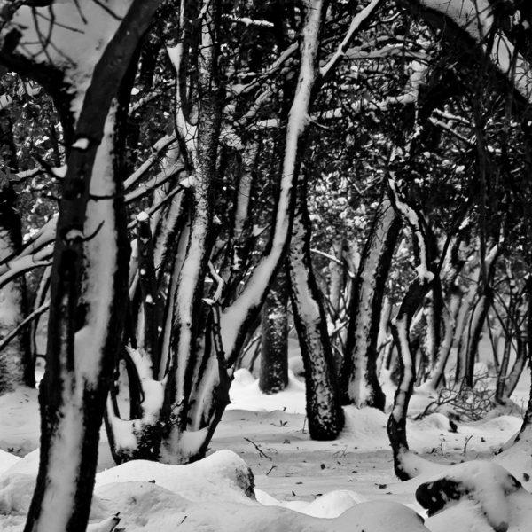 על צילום בשלג ומדידות אור